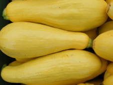 yellowsquash